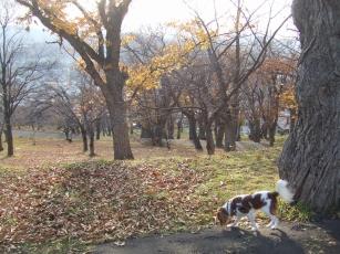 小樽の公園