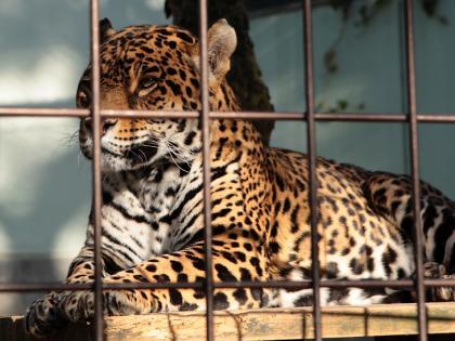 動物園-5