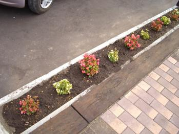 2011-08-30玄関前土壌改良、同短ツヅジ土撤去