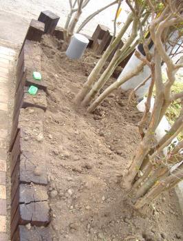 2011-08-30玄関前土壌改良、同短ツヅジ土撤去 (1)