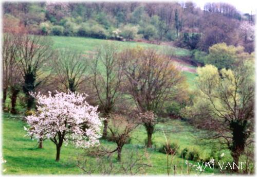 フランス、マコンの、春の訪れ。