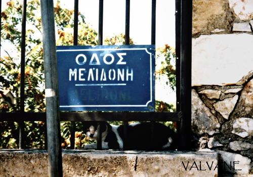 ギリシャ、ケラミコス遺跡の猫
