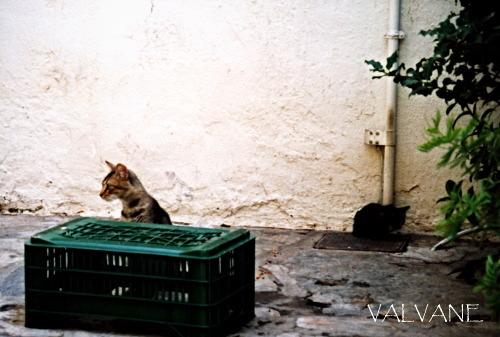 ギリシャ、路地の子猫と緑のプラケース