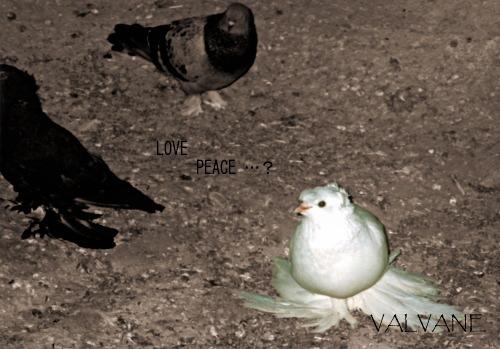 トルコ、カッパドキアの鳩 2