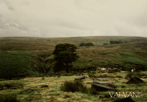 イギリス、荒野のトップ・ウィズンズ