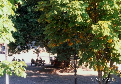 ギリシャ、広場を守る巨木