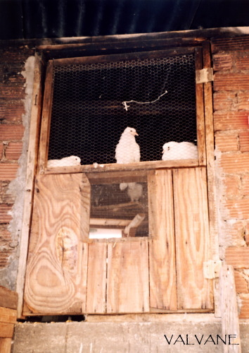 ギリシャ、メツォボの鳩小屋