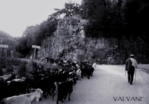 ギリシャ、ザゴリア地方の山羊飼い