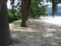 田井浜キャンプ場-4