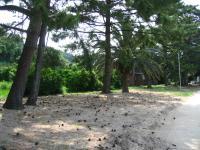 田井浜キャンプ場-6