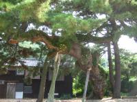 田井浜キャンプ場-8