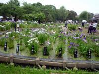 堀切菖蒲園庭園