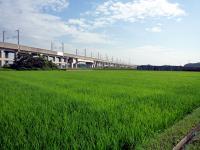 田園と高架線