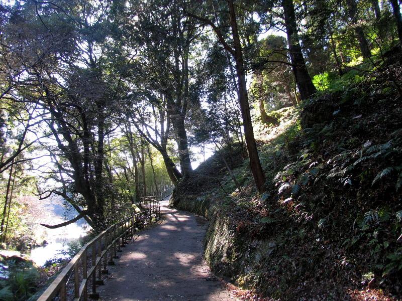 01-1 夏の散歩道
