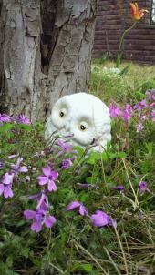 フクロウと草花