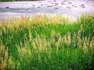 初夏の葦原 From:角館町観光協会HP 角館紀行 冬祭りの準備