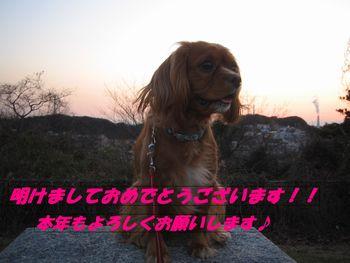 IMG_4290-1.jpg