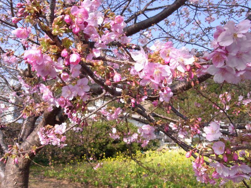 201128kawazu1.jpg