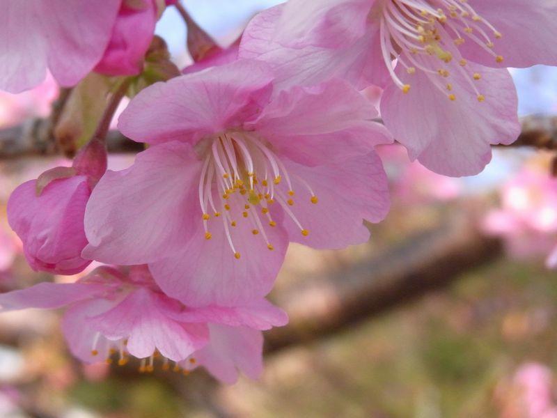 201128kawazu3.jpg