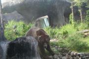 熊さん、かなり快適そうに遊んでましたが。
