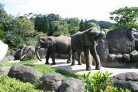 大きな象が2、3頭。かなり近いです・・・
