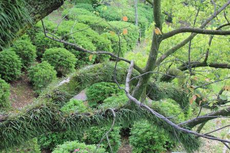 20110424岡崎城 (4)