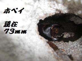 CIMG2106.jpg