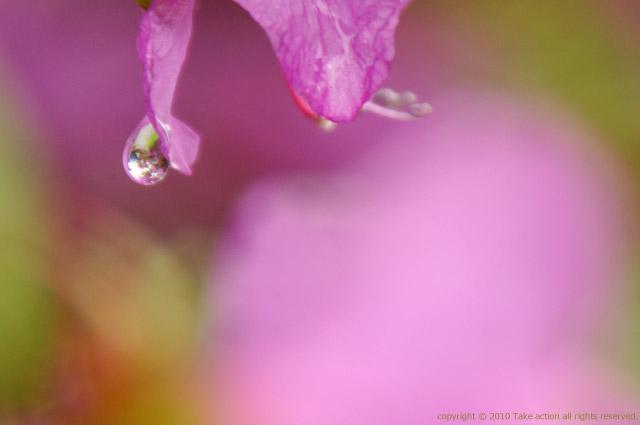 2011・5・21花としずく1