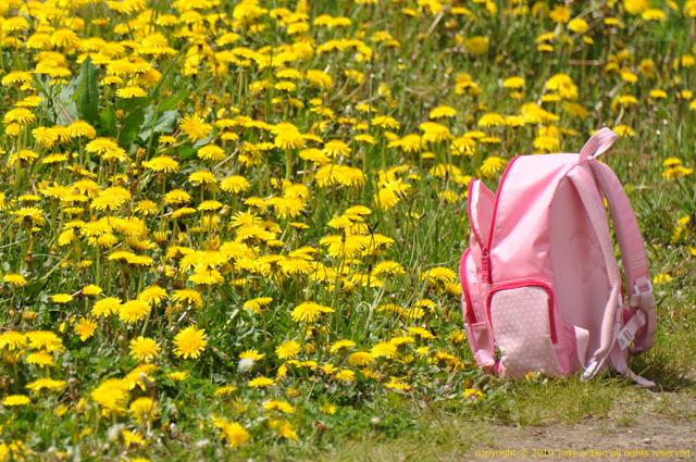 2011・6・5滝野すずらん公園5