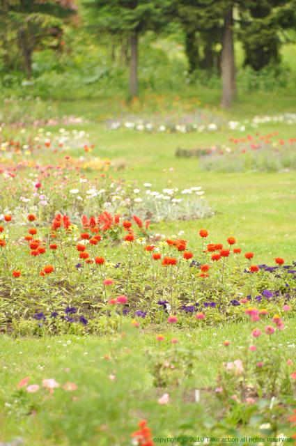 2011・6・18紫竹ガーデン2