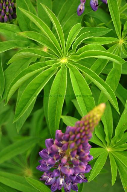 2011・6・18紫竹ガーデン3
