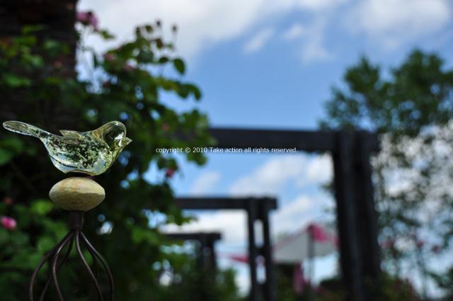 2011・7・6えこりん村バラ祭り2