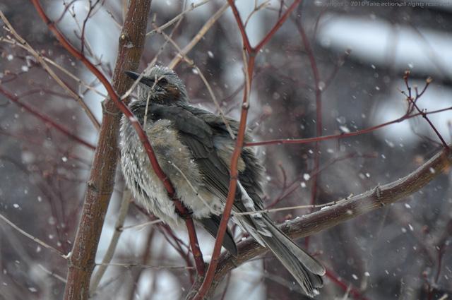 2012・3・1庭に来る鳥