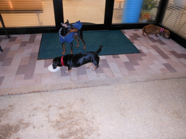 2012-04-09 狂犬病ワクチン (4)