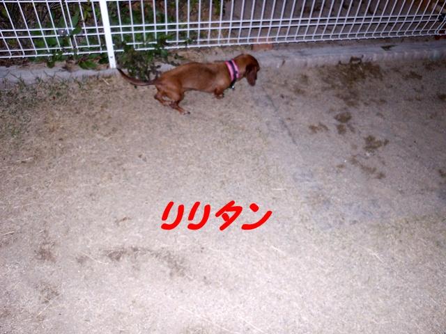 2012-04-09 狂犬病ワクチン (5)