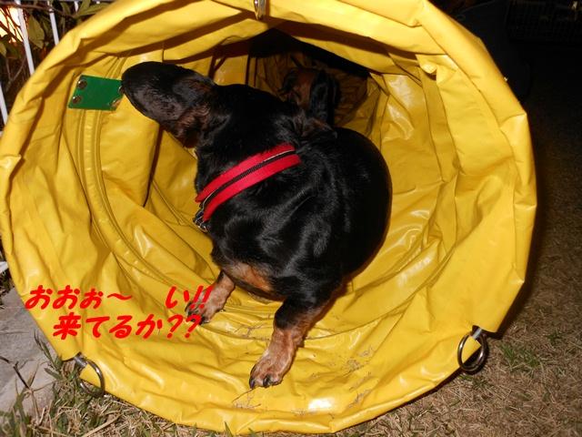 2012-04-09 狂犬病ワクチン (7)