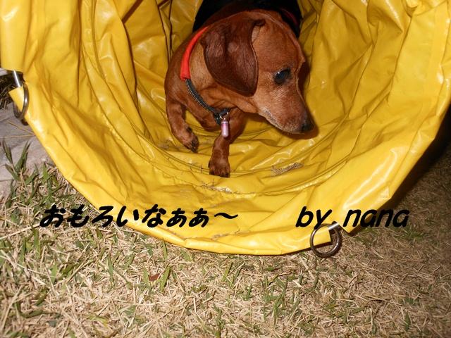 2012-04-09 狂犬病ワクチン (9)