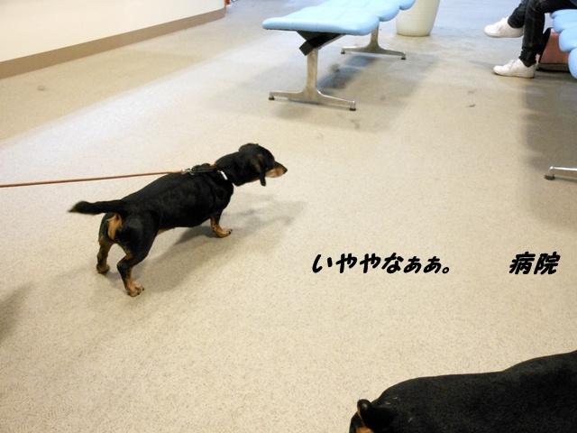2012-04-09 狂犬病ワクチン (11)