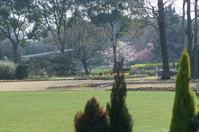 植物園の庭