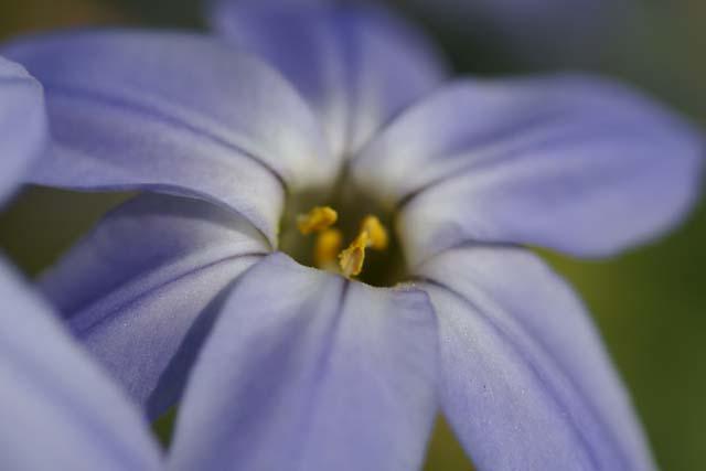 花にらの色