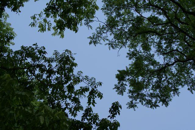 広葉樹と空
