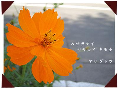 20061001-2.jpg