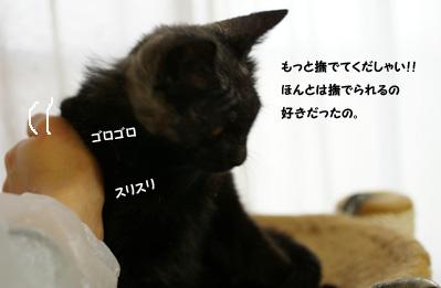 画像 036のコピー