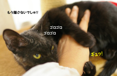 画像 004のコピー