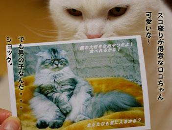 画像 4238のコピー