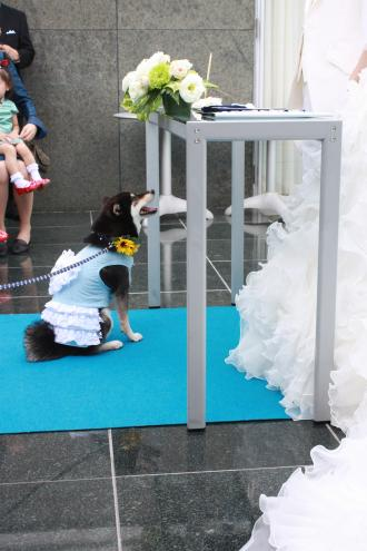 wedding-with-dogs.jpg