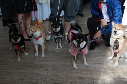wedding-with-dogs3.jpg