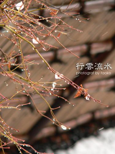 photo74.jpg