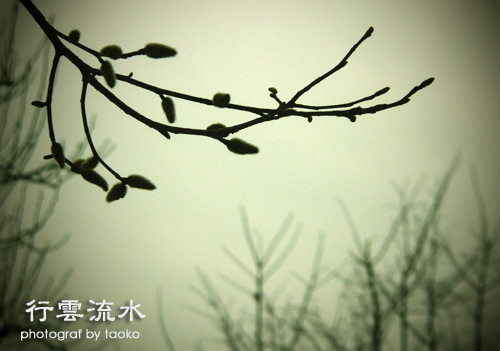 photo78.jpg