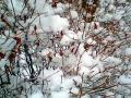 街路樹の雪